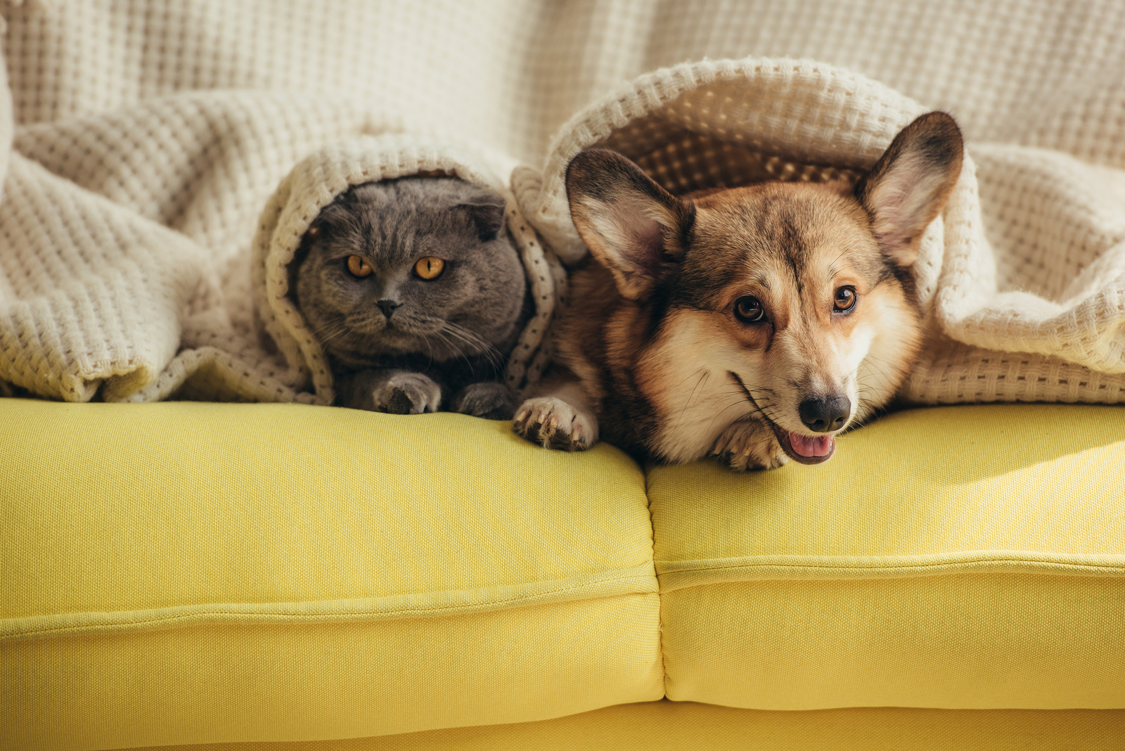 Mascotas en el sofá